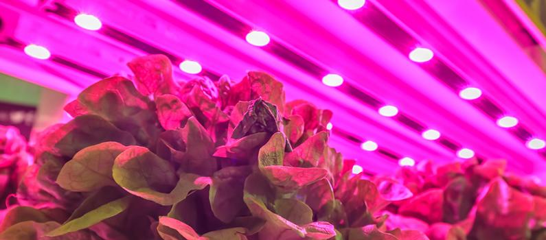 Iluminación LED para el cultivo de plantas